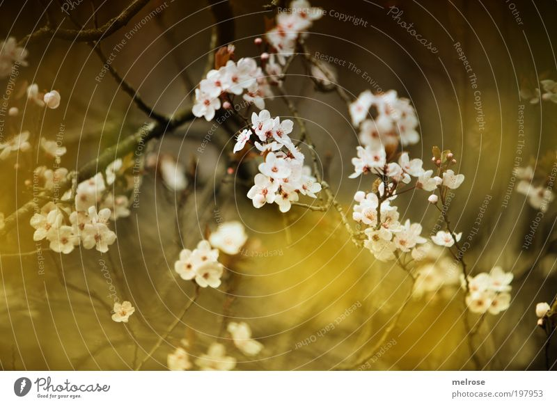 flower dream Freedom Touch Blossoming Hang Dream Happy Natural Positive Emotions Moody Happiness Contentment Spring fever Safety (feeling of) Hope Belief