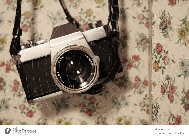 Beautiful Flower Photography Design Camera Uniqueness Wallpaper Discover Fragrance Hang Collection Objective Curlicue Collector's item