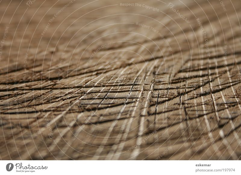 Old Wood Line Brown Esthetic Near Authentic Natural Dry Furrow Structures and shapes Parallel Sharp-edged Copy Space left Pattern