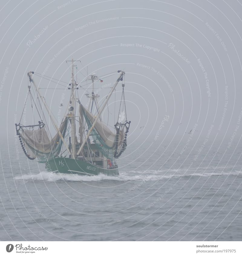 Water Loneliness Sadness Gray Moody Bird Work and employment Horizon Fog Waves Nutrition Driving Net North Sea Services Seagull