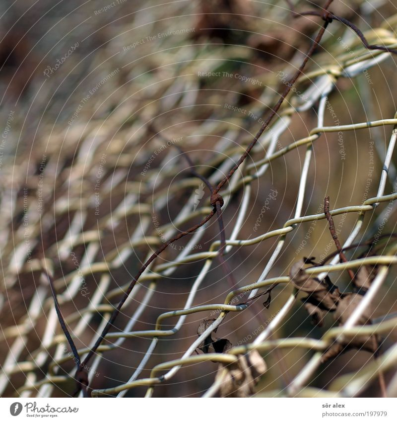 double fencing Wire netting fence Fence Wire fence Brown Protection Safety (feeling of) Border Possessions Real estate Private sphere Neighbor Fenced in Barrier