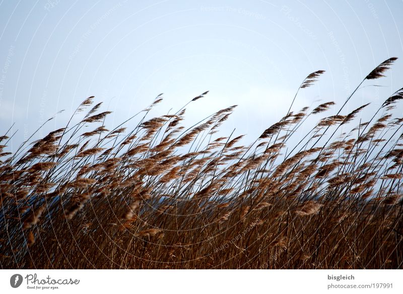 Sky Blue Plant Grass Brown Coast Wind Lakeside
