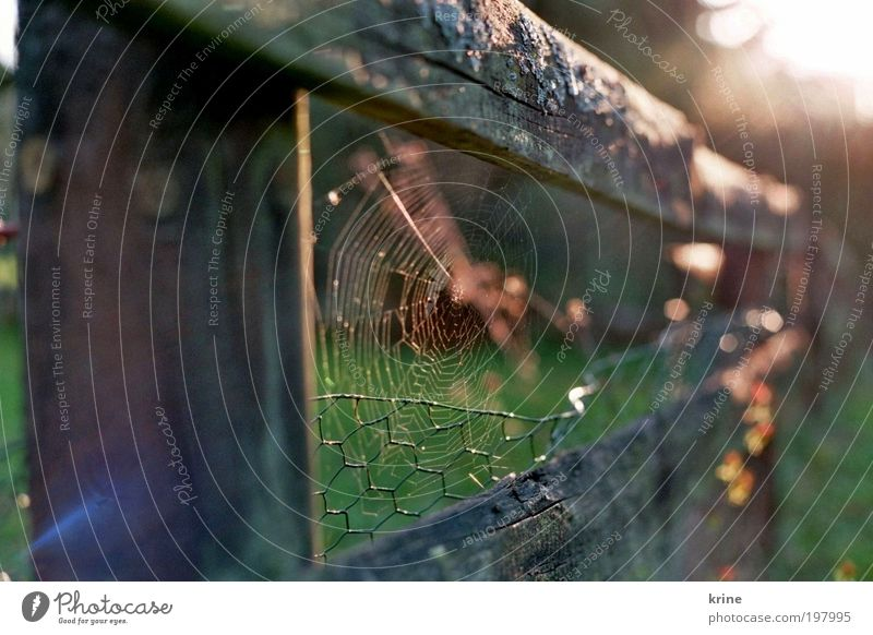 Nature Beautiful Calm Garden Esthetic Hope Safety Trust Belief Fence Spider Spider's web Optimism Spring fever Spin