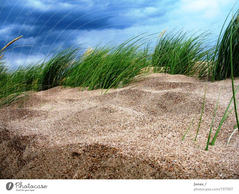 Sky Nature Plant Beach Clouds Freedom Landscape Environment Grass Sand Moody Air Weather Earth Wind Esthetic