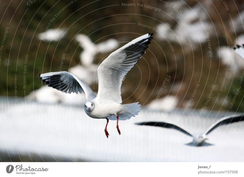 eye contact Environment Nature Animal Air Weather Deserted Bird Animal face Wing Seagull 2 Flock Observe Flying Feeding Aggression Esthetic Authentic Elegant