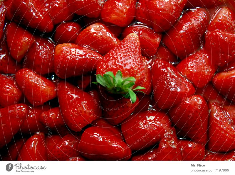 Plant Red Environment Spring Fruit Glittering Food Fresh Nutrition Sweet Delicious Organic produce Vitamin Strawberry Dessert Vegetarian diet