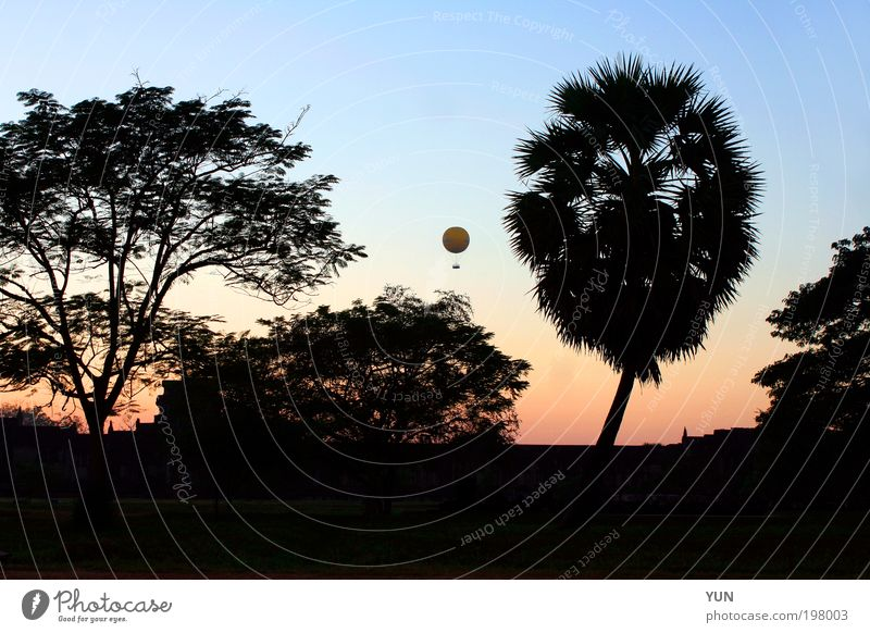 Balloon Evening Vacation & Travel Tourism Far-off places Sightseeing Nature Landscape Plant Air Sky Cloudless sky Horizon Sunrise Sunset Tree Park Forest