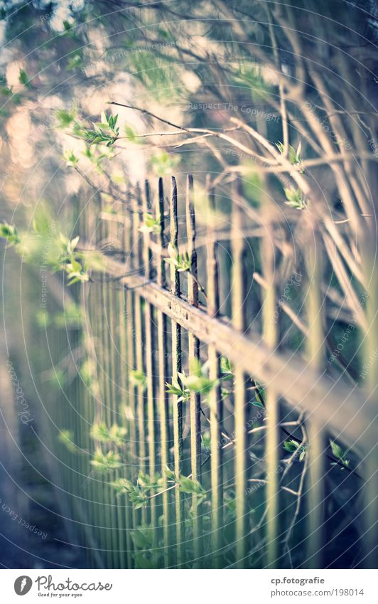 Old Plant Garden Bushes Living or residing Retro Fence Beautiful weather Testing & Control Gardener Judicious Orderliness