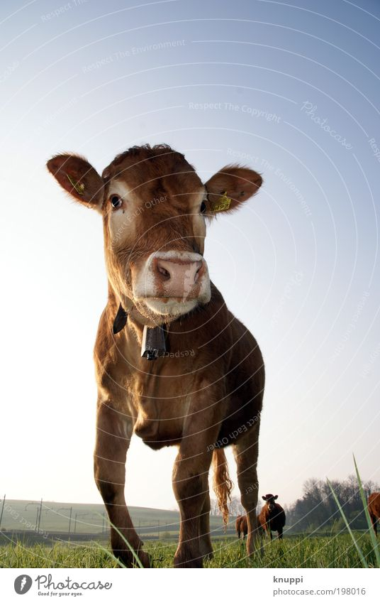 And the cow makes... Well-being Contentment Vacation & Travel Tourism Trip Freedom Summer Bell Environment Nature Landscape Air Sky Cloudless sky Sunlight