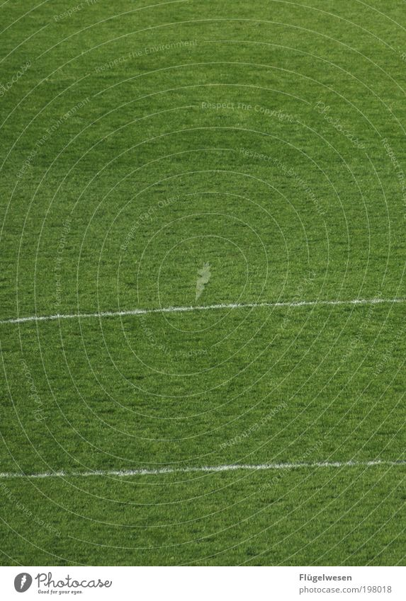 Sports Line Background picture Soccer Lawn Grass surface Football pitch Ball sports Environment Grass green Sporting Complex Field line