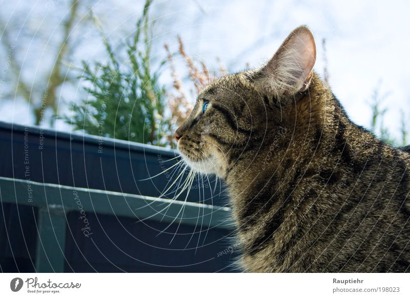 Finally managed. Pet Cat 1 Animal Observe Dream Colour photo Exterior shot Day Animal portrait