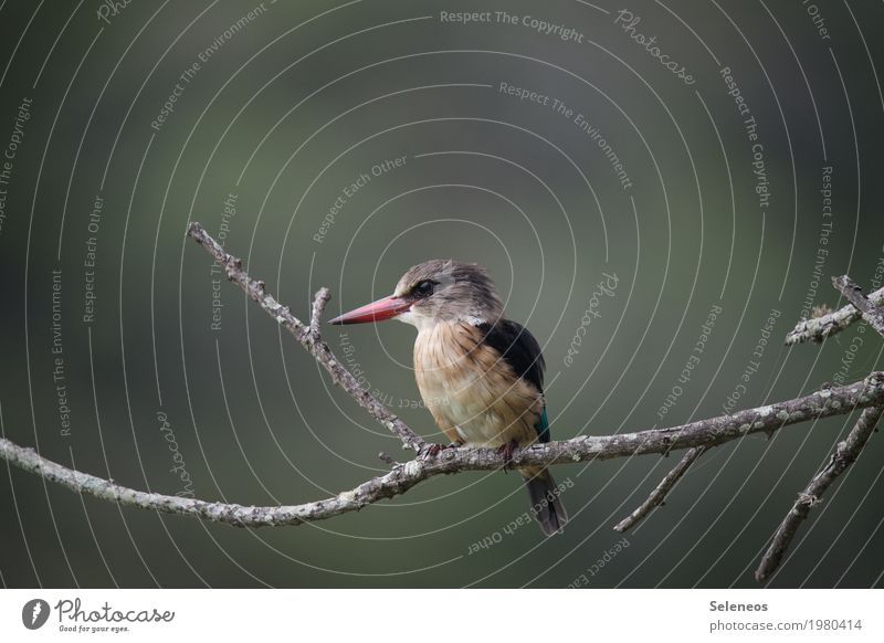 Nature Tree Animal Forest Environment Small Garden Freedom Bird Park Wing Near Exotic Animal face Beak