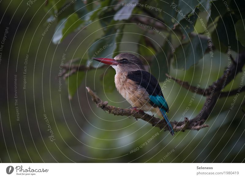 as light as a feather Trip Freedom Summer Environment Nature Plant Tree Branch Garden Park Animal Wild animal Bird Animal face Wing Kingfisher Beak 1 Small Near
