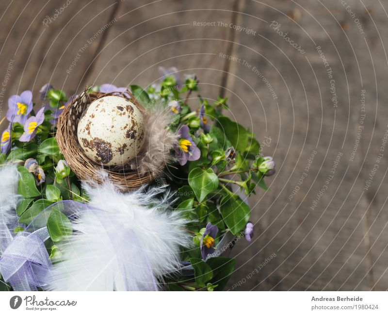 Easter nest Design Event Nature Pink celebration decoration decorative festive flower happy holiday home house light meadow natural Nest rustic season