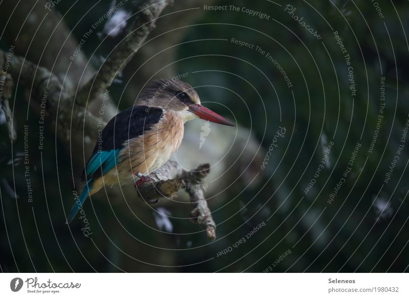 Bobby Brown Environment Nature Summer Tree Branch Forest Animal Wild animal Bird Animal face Beak Kingfisher 1 Observe Hunting Small Near Colour photo