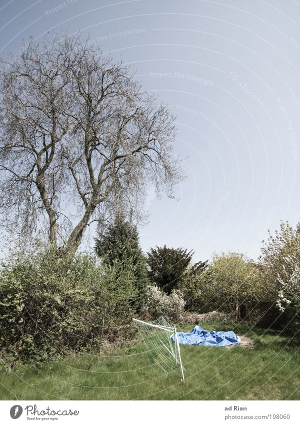 Nice and cozy backyard Nature Landscape Sky Cloudless sky Sunlight Spring Warmth Tree Grass Bushes Garden Park Meadow Playground Clothesline Faded Wild Calm