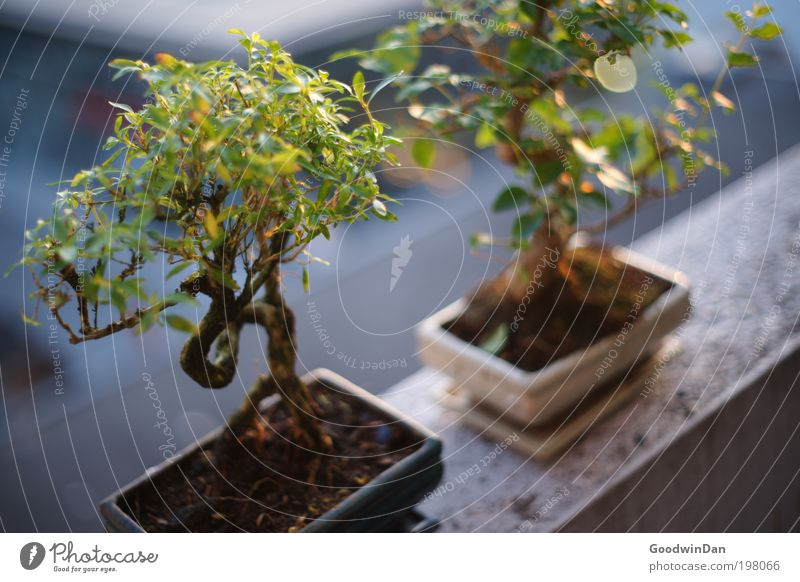 Nature Tree Plant Spring Think Environment Earth Near Observe Natural Blossoming Illuminate Beautiful weather Exotic