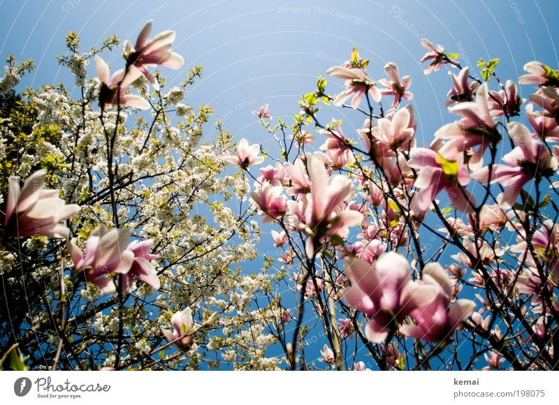 Nature Sky White Tree Sun Flower Plant Leaf Blossom Spring Garden Warmth Landscape Pink Environment Growth