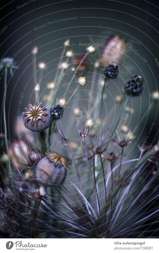 Nature Beautiful Flower Blue Plant Calm Colour Dark Cold Autumn Style Blossom Grass Dream Environment Violet