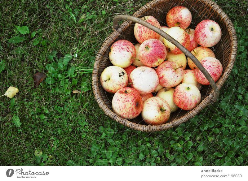 All BIO Food Fruit Apple Nutrition Organic produce Vegetarian diet Basket Summer Living or residing Garden Thanksgiving Environment Nature Autumn Grass Park