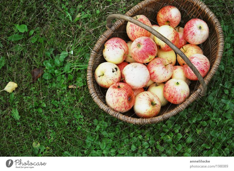 Nature Summer Nutrition Autumn Garden Grass Environment Park Food Healthy Fruit Success Fresh Living or residing Apple Village