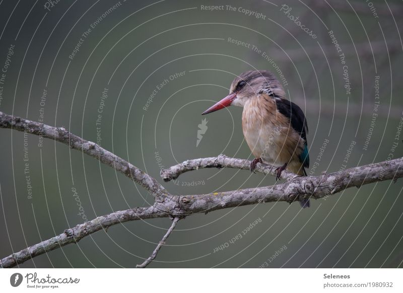 Hans Trip Freedom Environment Nature Tree Coast Animal Wild animal Bird Animal face Kingfisher 1 Near Colour photo Exterior shot Deserted Shallow depth of field