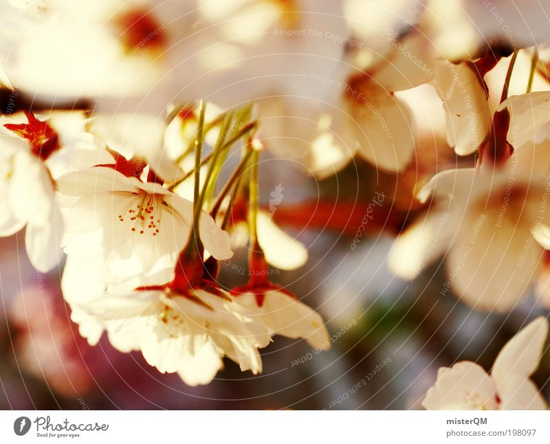 Nature Plant White Relaxation Landscape Loneliness Calm Environment Life Spring Contentment Elegant Idyll Esthetic Future Blossoming