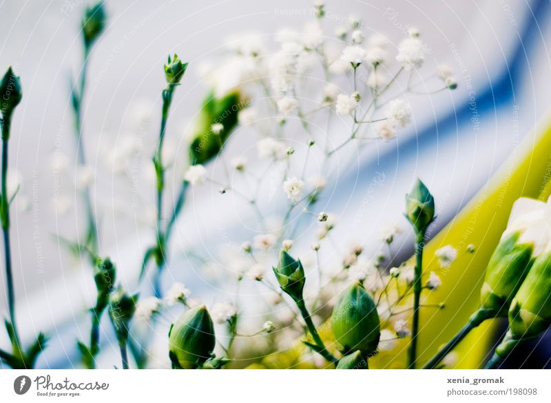 Nature White Flower Green Blue Plant Summer Blossom Grass Spring Pink Environment Bushes Foliage plant Multicoloured Morning