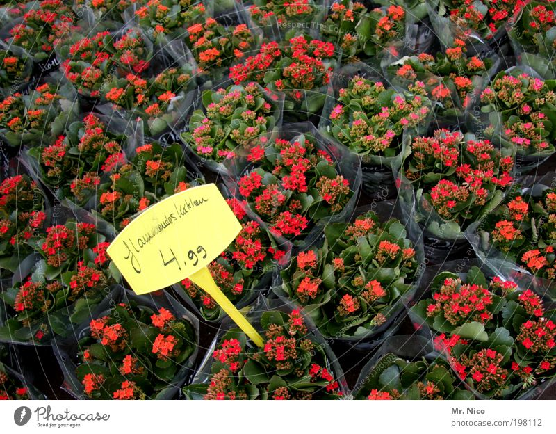 Nature Green Red Plant Flower Yellow Garden Blossom Fresh Digits and numbers Transience Markets Advertising Blossoming Bouquet Marketplace
