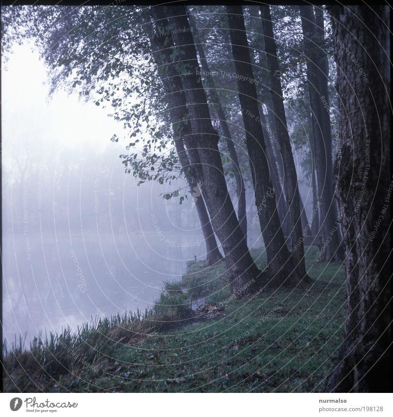 Nature Water Tree Plant Calm Animal Forest Dark Landscape Grass Sadness Art Fog Fish Gloomy Idyll