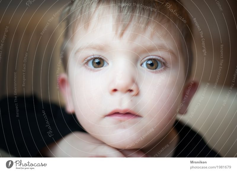 look at Human being Child Toddler Boy (child) Infancy Eyes 1 1 - 3 years Emotions Moody Contentment Truth Son Beautiful Cute Brash Brown eyes Blonde Looking Sit