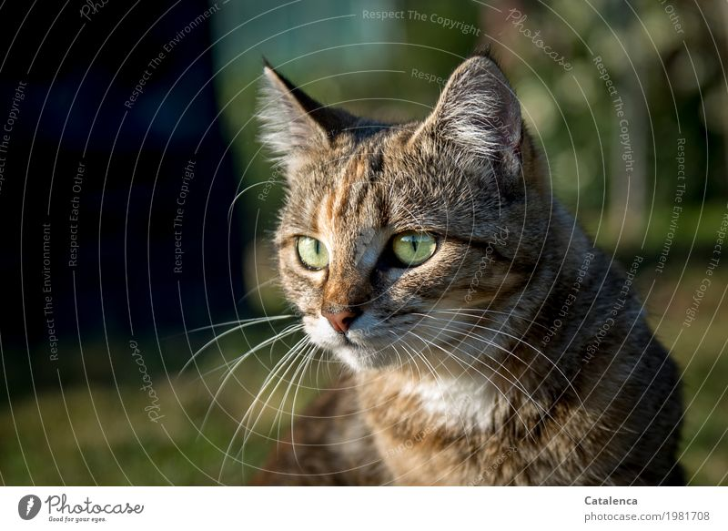 be on the lookout Nature Plant Animal Summer Beautiful weather Tree Grass Garden Meadow Cat Animal face 1 Observe Sit Brown Gold Green Black Moody Attentive