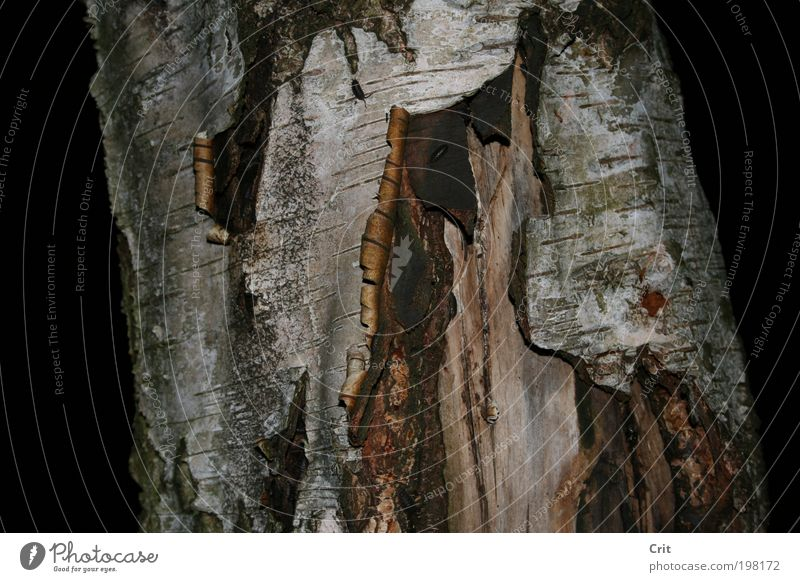 tree bark Nature Tree Wood Earth Pair of animals Environment Night Wild plant