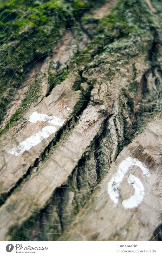 Nature Old Tree Plant Environment Signs and labeling Uniqueness Digits and numbers Dry Crack & Rip & Tear Moss Year date Tree bark Forestry Adjectives