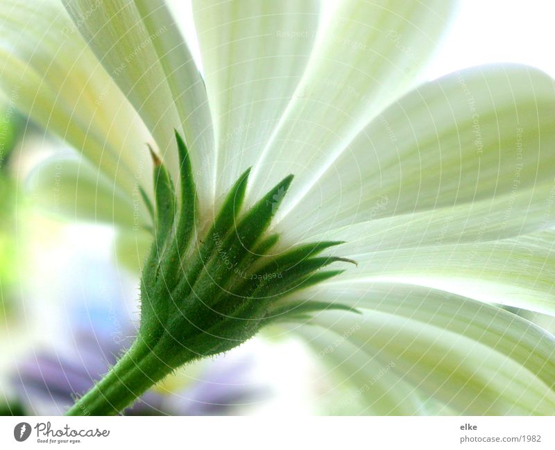 to the sun Stalk Plant Flower Leaf Growth Green Blossom Part of the plant Botany Blossoming Nature Sun