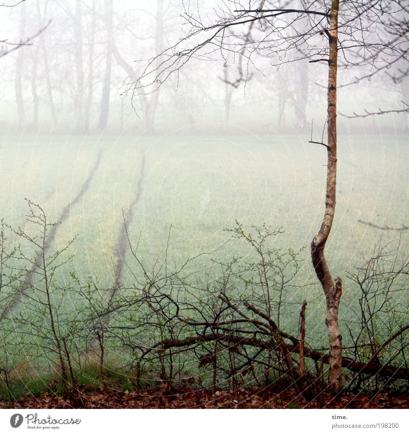Life alone and free like a tree Environment Nature Landscape Plant Water Fog Tree Bushes Field Growth Cold Birch tree Undergrowth Damp Twig Branch Frost furrow