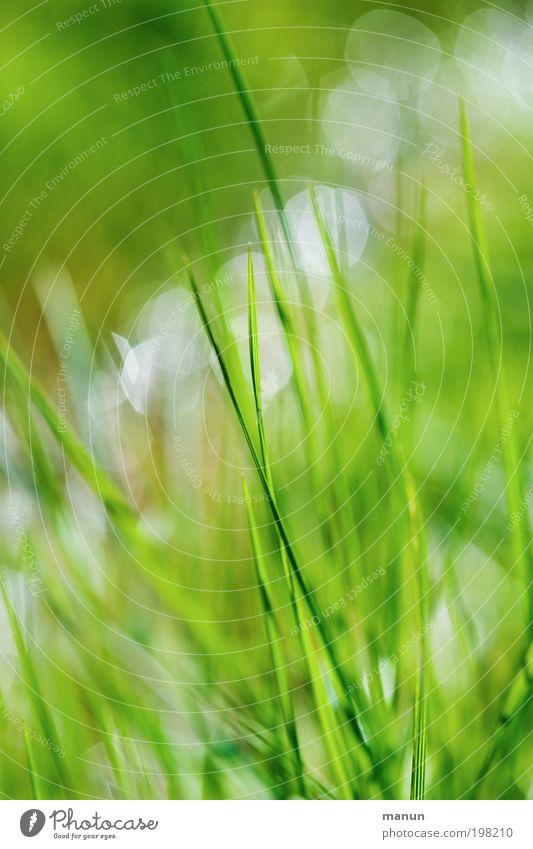 Nature Green Plant Summer Calm Relaxation Meadow Grass Spring Garden Bright Environment Wet Fresh Happiness Joie de vivre (Vitality)