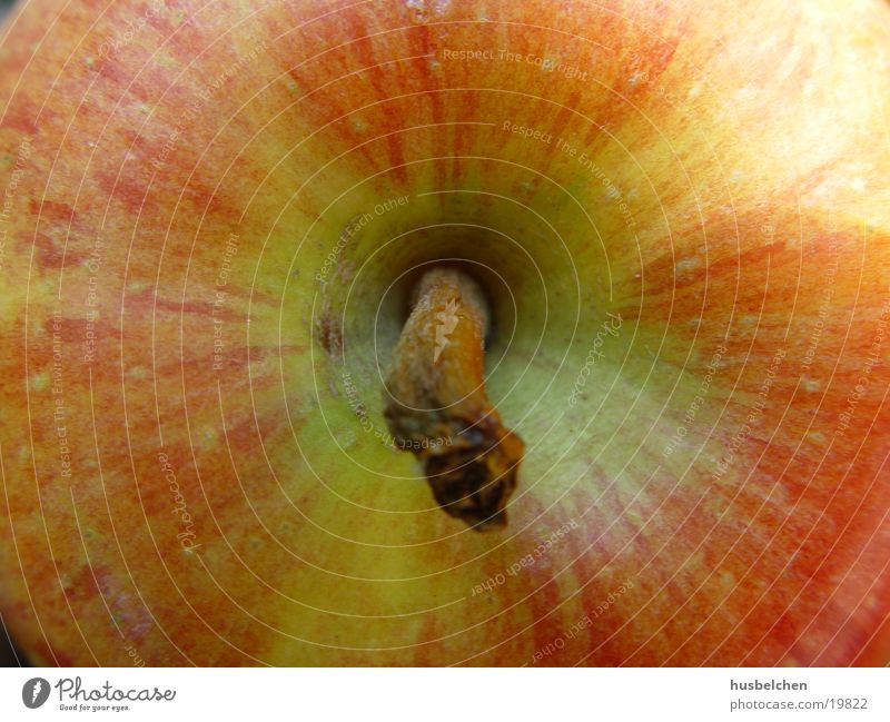 big apple Tree Vitamin Healthy Apple Fruit Garden Pomacious fruits