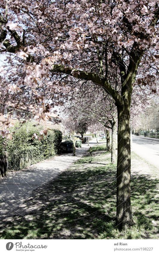 When trees provide shade Deserted Garden Pedestrian Street Lanes & trails Illuminate Exterior shot Light Shadow Day