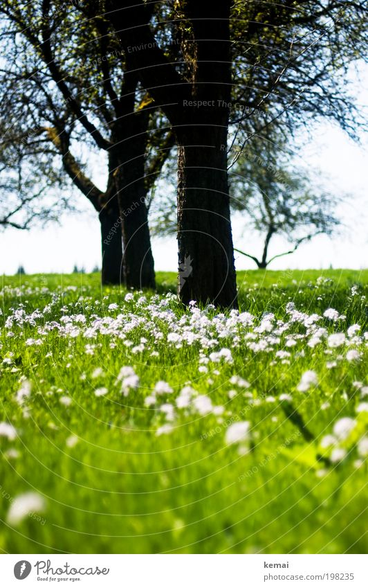 meadow, flowers, trees Environment Nature Landscape Plant Sky Sun Sunlight Spring Summer Climate Beautiful weather Warmth Tree Flower Grass Blossom