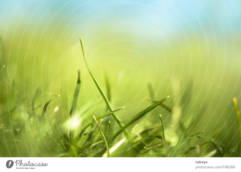 Nature Green Plant Relaxation Meadow Grass Warmth Growth Lawn Soft Lie Stalk Beautiful weather Foliage plant