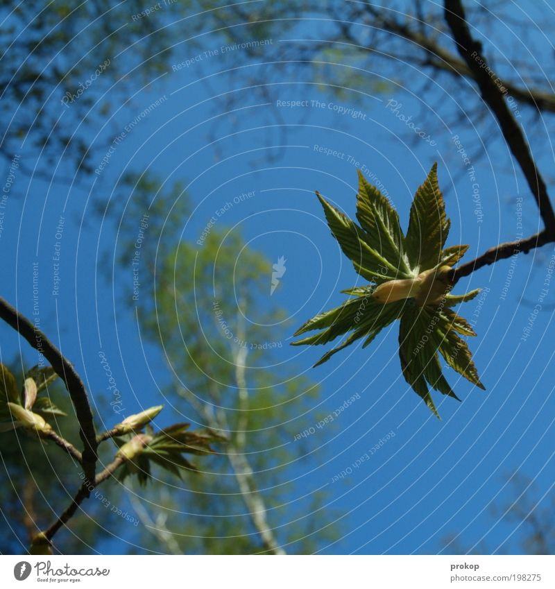 Nature Beautiful Sky Tree Plant Summer Leaf Forest Spring Freedom Happy Landscape Power Small Weather Environment