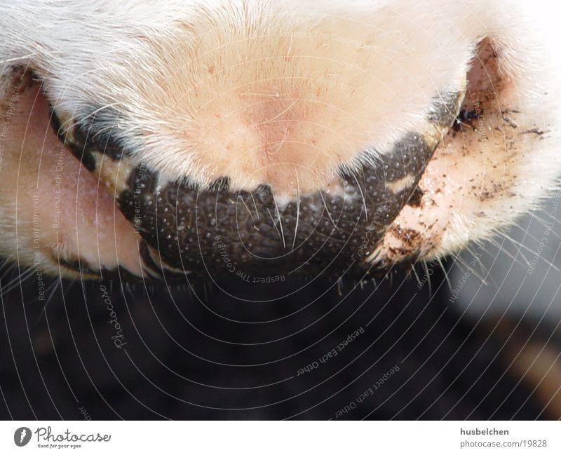 Cool! Cow Snout Nostrils Facial hair Nose Breathe