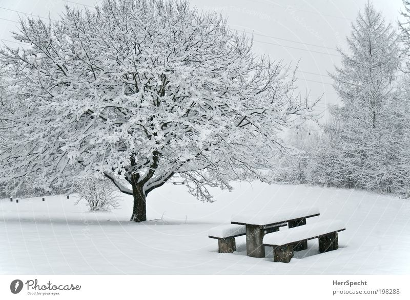 picnic area Environment Nature Landscape Winter Ice Frost Snow Tree Bushes Meadow Forest White Bench Table Snow layer Colour photo Subdued colour Exterior shot