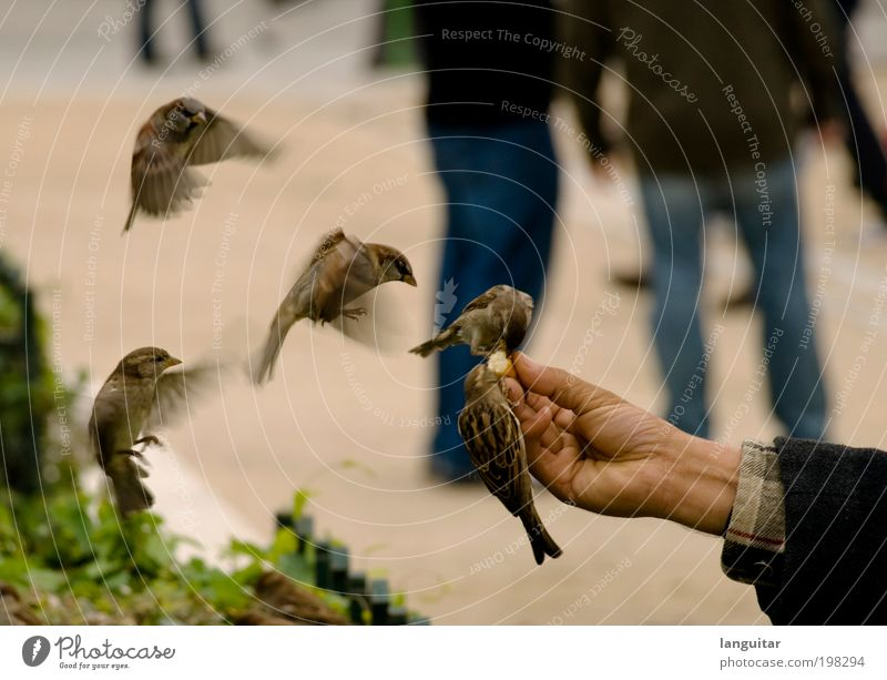 feeding time Hand Fingers Bird Wing Touch Flying To feed Feeding Brash Free Cute Love of animals Speed Lure Chirping Crumbs Colour photo Subdued colour