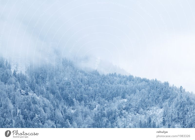 winter mountain forest in fog, Alps, Germany Nature Vacation & Travel White Landscape Winter Forest Mountain Snow Snowfall Weather Fog Ice Vantage point Frost