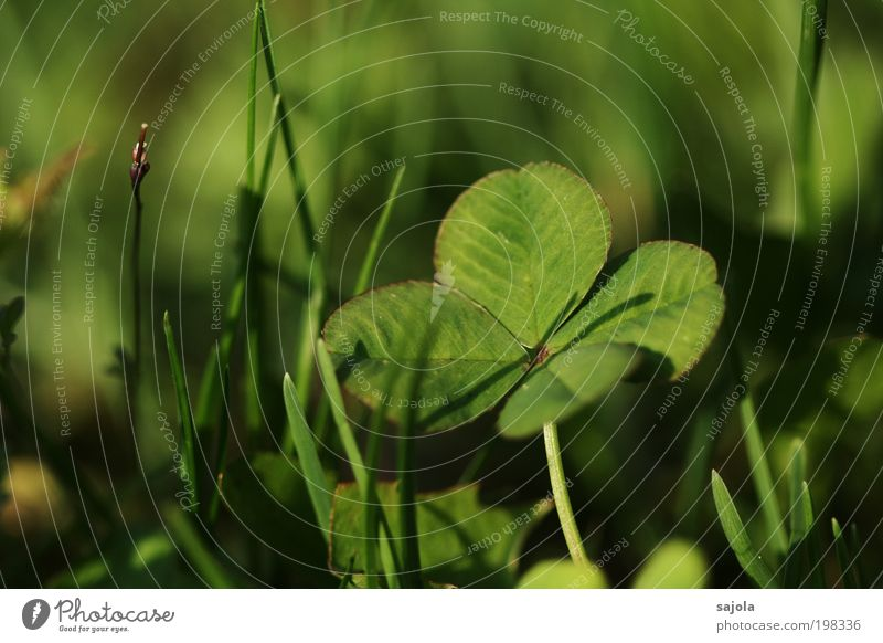 good luck jo Environment Nature Plant Grass Cloverleaf Esthetic Green Happy Good luck charm Four-leafed clover Four-leaved Shadow Congratulations Love of nature
