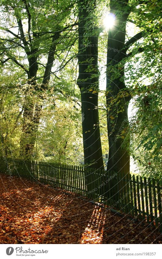 Nature Tree Sun Calm Forest Autumn Garden Park Warmth Bushes End Natural Idyll Serene Illuminate To enjoy