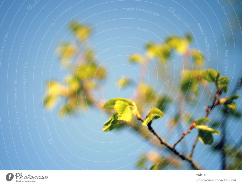 Sky Blue Green Tree Plant Leaf Relaxation Emotions Movement Weather Brown Natural Esthetic Growth New Change