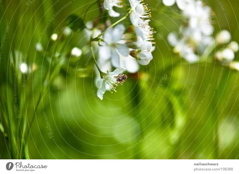 spring flowers Environment Nature Plant Spring Flower Grass Blossom Garden Park Meadow Esthetic Friendliness Happiness Natural Green White Spring fever Pure